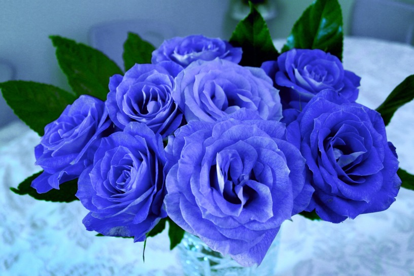 flowers-616901_1920